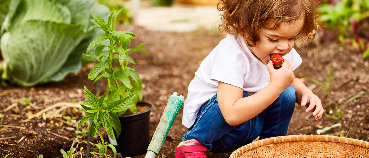 Farm to Early Care & Education Initiatives